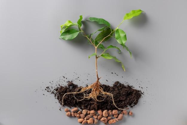 土壌と排水のある若い緑の植物。成長する植物