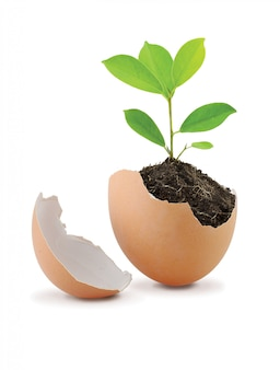 Young green plant with soil in eggshell isolated on white