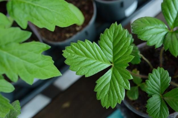 흙이 있는 플라스틱 컵에 어린 녹색 묘목.