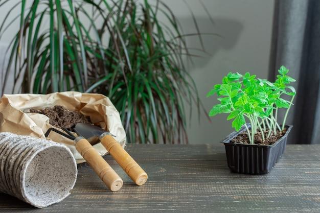 나무 배경에 있는 냄비에 토마토의 어린 녹색 묘목, 땅과 흙손, 정원 삽이 있는 작은 가방, 묘목 이식, 찔러