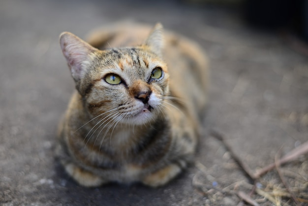 A young grey tabby cat looking to the sky