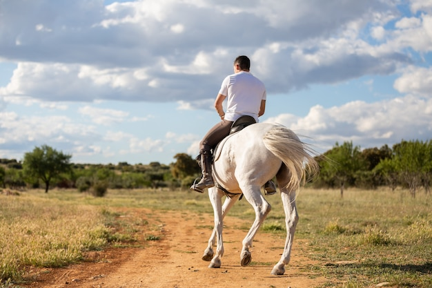 Young guy in casual outfit riding white horse on meadow a sunny day