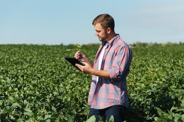 Молодой красивый инженер сельского хозяйства на соевом поле с планшетом в руках в начале лета