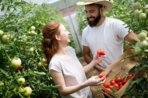 Молодая счастливая пара фермеров, работающих в теплице