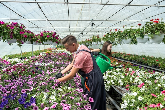 Young happy couple working with flowers at industrial greenhouse. lifestyle