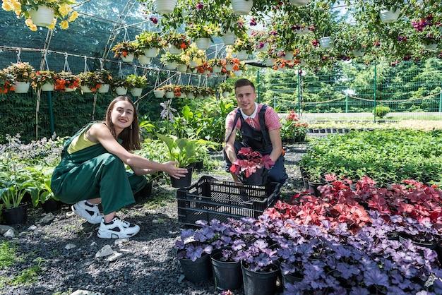 若い幸せな花屋のカップルは温室で花の世話をします。家族経営
