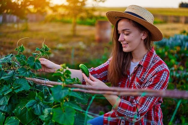 Молодая счастливая улыбающаяся женщина-фермер собирает урожай спелых домашних органических огурцов в своем собственном саду