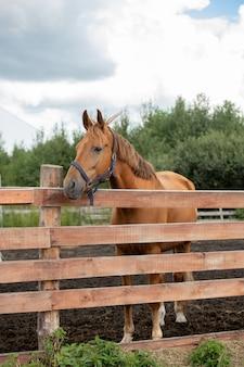Молодая здоровая коричневая породистая кобыла стоит за деревянным забором, отдыхая в сельской местности над облачным небом