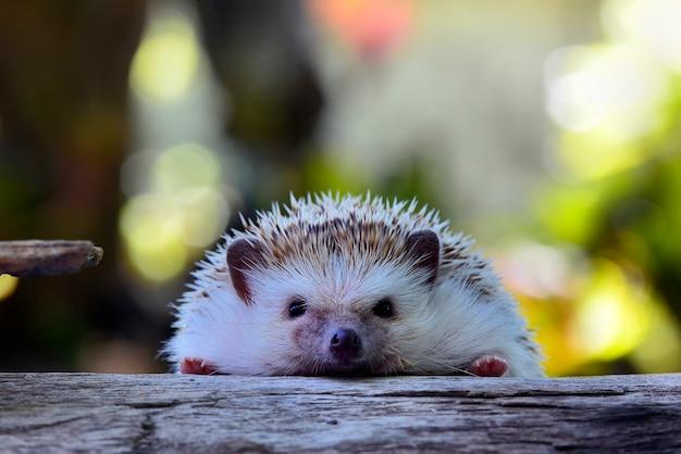 Young hedgehog in natural habitat .