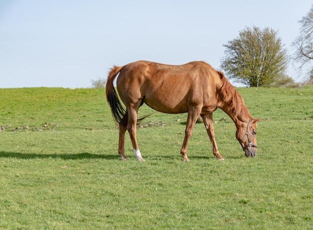Молодая лошадь пасется в загоне, время весны.