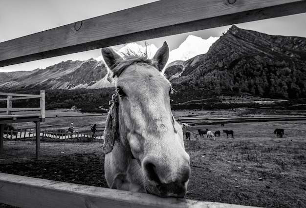 Young horse in meadow with mountain range background