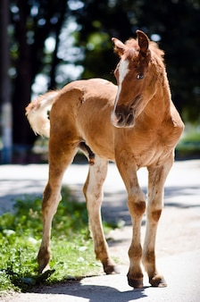 Young horse on the road