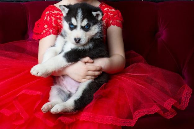 Молодой щенок хаски на руках у маленькой девочки в красном платье