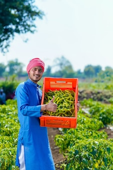Young indian farmer collecting green chilly in plastic crates at green chilly field