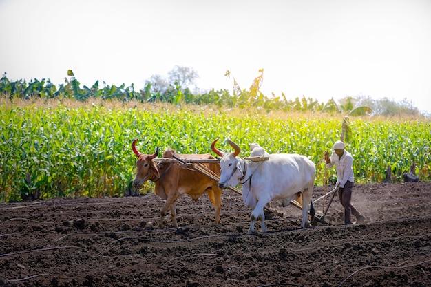 フィールドで耕す若いインドの農家