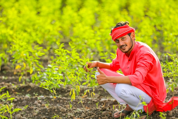 Young indian farmer sitting in green pigeon pea field