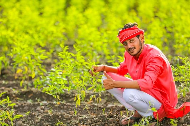Молодой индийский фермер сидит в поле зеленого голубя гороха