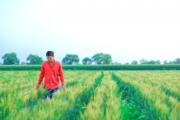 Young  indian farmer at wheat field
