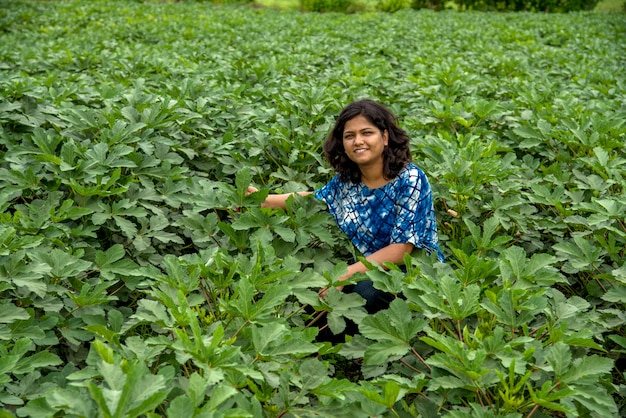 Young indian woman farmer in okra plant or ladyfinger farm field.