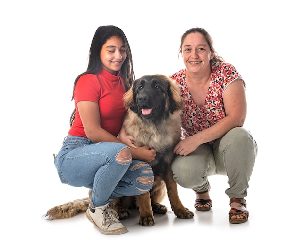 Young leonberger and women in front of white background