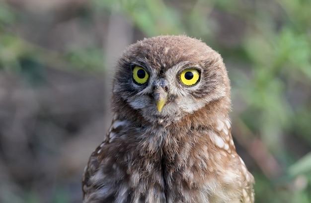 Молодая сова возле гнезда