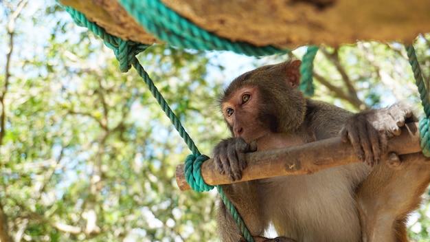 Молодая обезьяна макака с разноцветными глазами сидит на ветке дерева