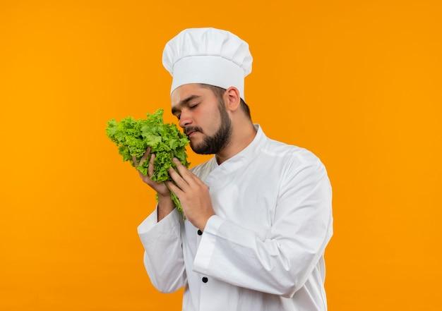 オレンジ色のスペースで隔離のレタスを保持し、嗅ぐシェフの制服を着た若い男性料理人