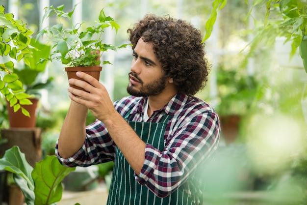 Молодой мужчина садовник изучения горшечных растений