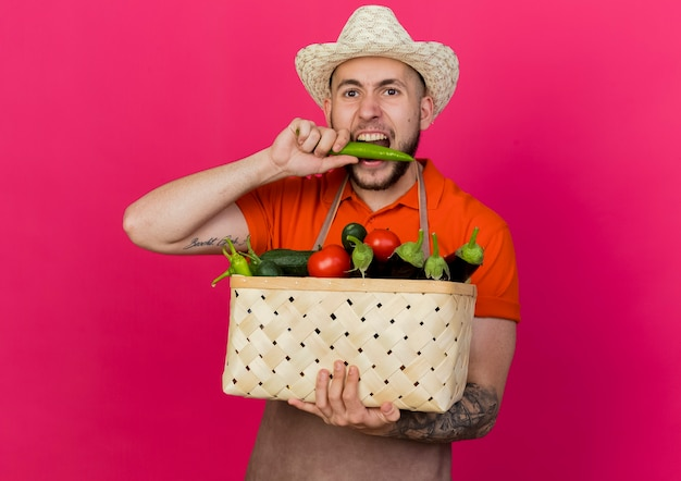 ガーデニング帽子をかぶった若い男性の庭師は、野菜のバスケットを保持し、唐辛子を噛むふりをします