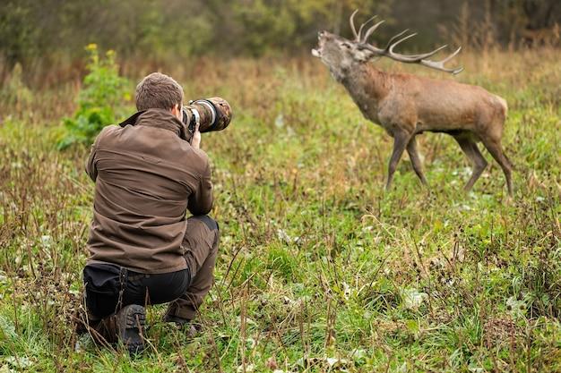 アカシカ、cervus elaphus、彼の近くの緑の牧草地で轟音を立てる雄鹿の写真を撮る茶色の服を着た若い男性の野生生物写真家。野生動物を記録するカメラを持った観光客。