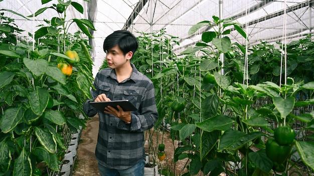 Агроном молодого человека осматривает с помощью цифрового планшета в теплице.