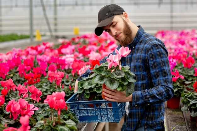 Young man in cap in greenhouse chooses cyclamen plant for flower shop. flora and gardening. working with flowers and plants