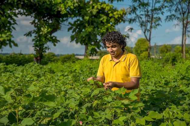 A young man farmer in a cotton farm examines and observing the field.