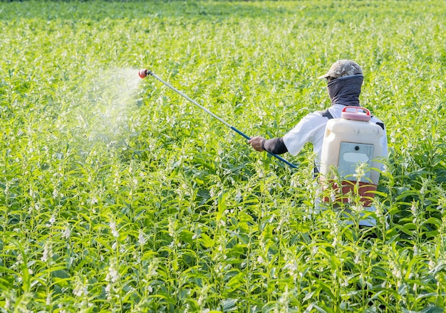 A young man farmer spraying pesticides (farm chemicals) on his own sesame field