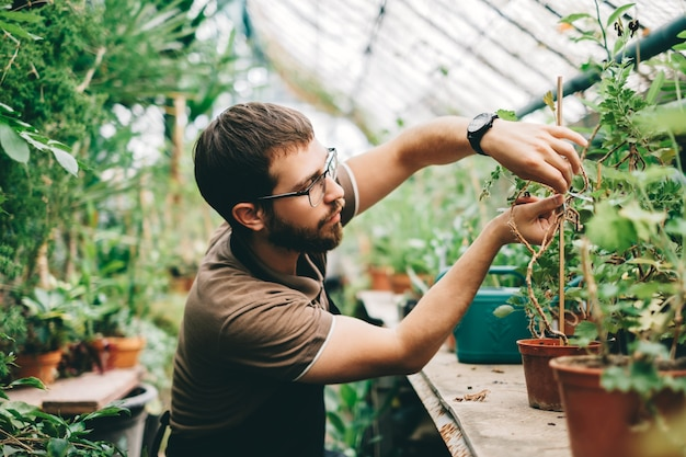 Young man gardener environmentalist caring for plants in greenhouse.