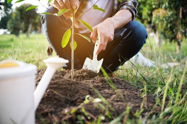 Молодой человек садовник, сажает дерево в саду, садоводство и полив растений