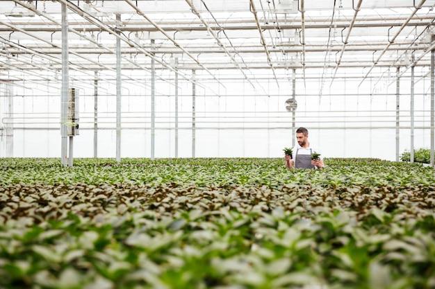 Young man gardener standing in greenhouse