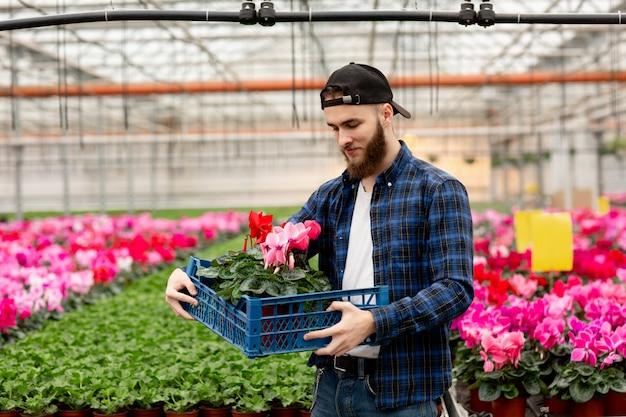 Молодой человек в кепке в теплице выбирает завод цикламенов для цветочного магазина. флора и садоводство. работа с цветами и растениями