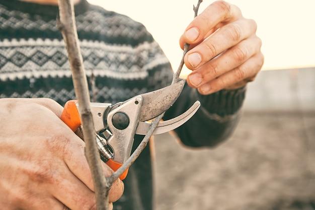 若い男は春先に剪定はさみで木の枝を切っています。