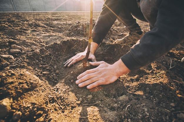 Молодой человек сажает дерево в землю