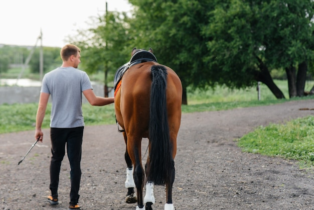 A young man stands and looks at a thoroughbred stallion on the ranch. animal husbandry and breeding of thoroughbred horses.