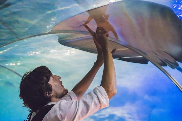 若い男が海洋水族館のトンネルでアカエイの魚に触れます。