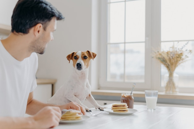 Young man turns away from camera, looks attentively at pedigree dog, have lunch together, eat tasty delicious pancakes at kitchen table, use forks, pose in spacious light room with big window