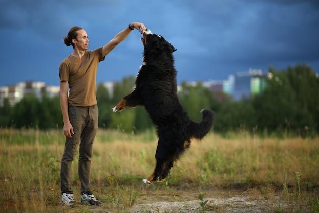 夏の畑にバーニーズマウンテンドッグと歩く若い男