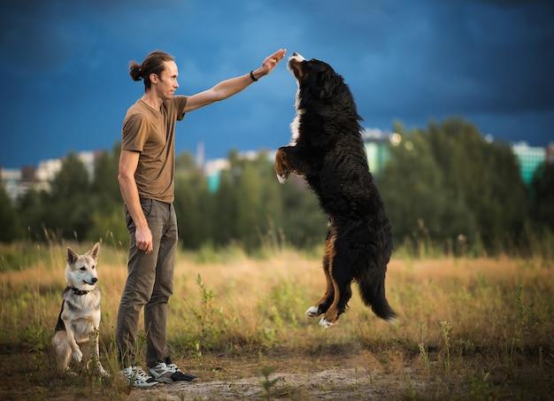 夏の野原で2匹の犬バーニーズマウンテンドッグと羊飼いの犬と一緒に歩く若い男