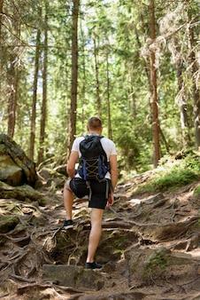 배낭을 가진 젊은 남자가 침엽수 림에 뿌리가있는 바위 길을 올라갑니다.