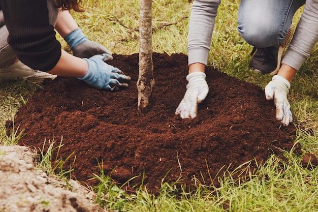 작업복을 입은 젊은 부부가 땅에 삽으로 묘목을 심고 있습니다. 영토의 젠트리피케이션 배경. 조경, 자연, 환경 및 생태학의 개념. 복사 공간