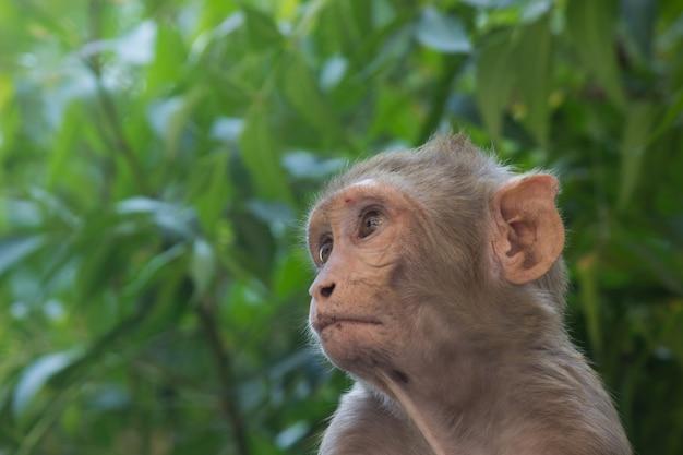 Молодая обезьяна, также известная как макака-резус, сидит под деревом в игривом настроении