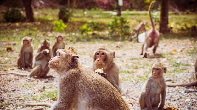 タイ、東南アジアの若いサルのマカク。幸福の背景の概念。