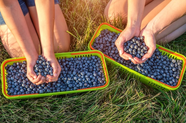 Young mother with her daughter picking blueberries in baskets on organic farm